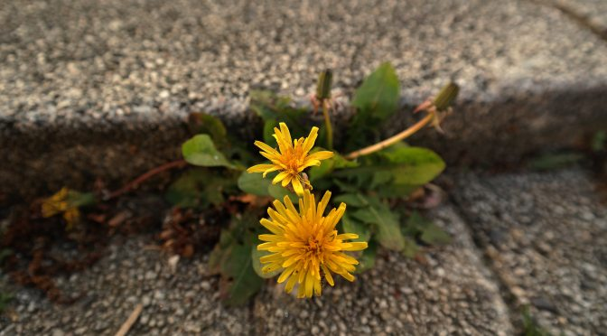 Blooming Through Cement
